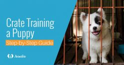 8 Steps To Crate Train a Puppy Fast (Complete Guide)