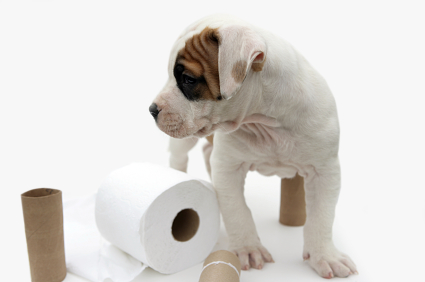 How To Re Potty Train Your Dog