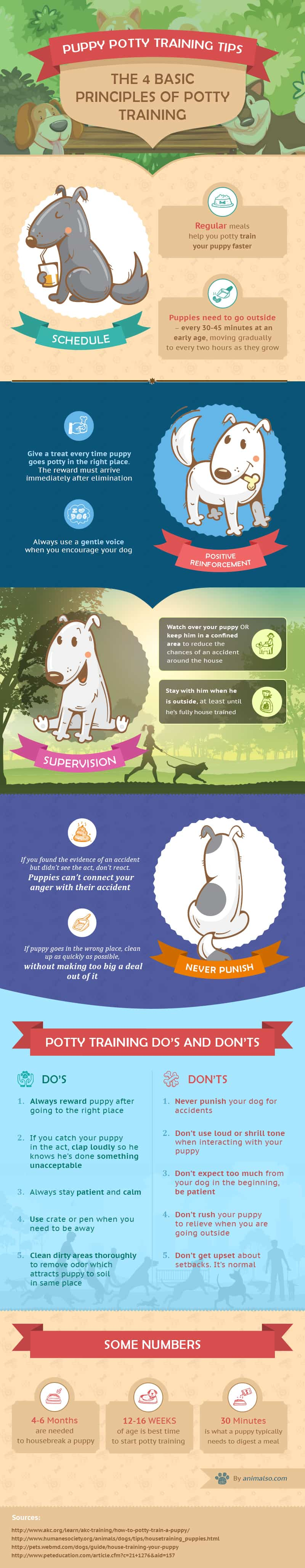 Do's and Don'ts of Potty Training a Puppy [Infographic] | ecogreenlove