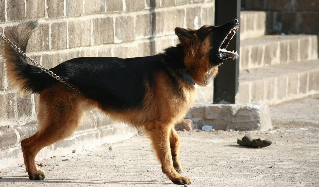 1 when she defends her territory - Best Way To Stop A Dog From Barking