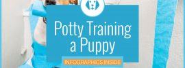 Potty Training Tips for Puppies & Dogs (Complete How-To Guide)