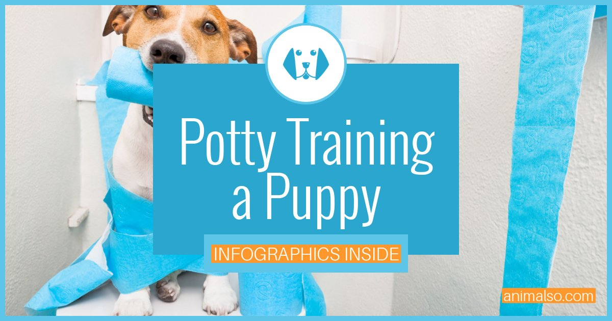 Potty Training Tips For Puppies Dogs Complete How To Guide