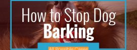 Easy Stop Dog Barking Tips (All Possible Cases)