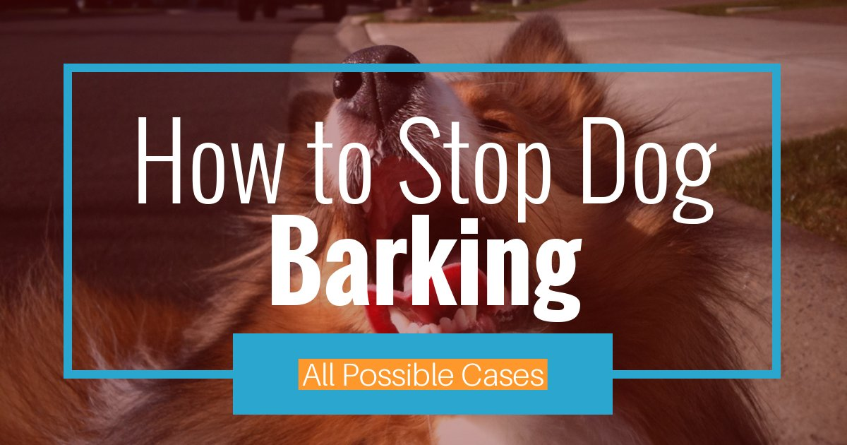 Easy Stop Dog Barking Tips All Possible Cases Animalso