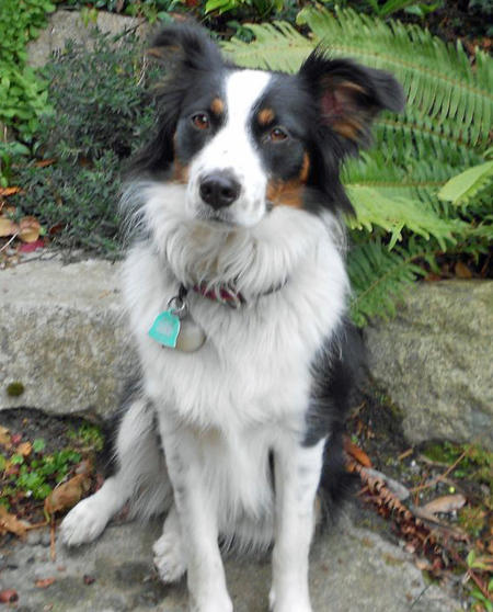 7 Facts That Will Make You Love the Border Collie German ...