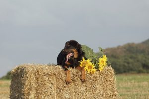 can dogs eat sun flower seeds?