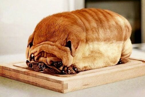 Dog breeds that look like pugs 10