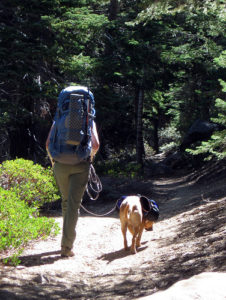 Hiking with dog