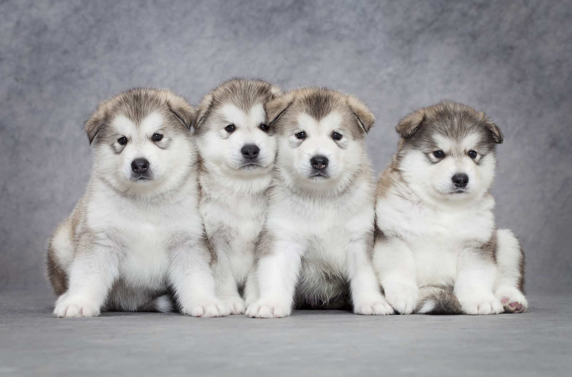 Getting First Dog