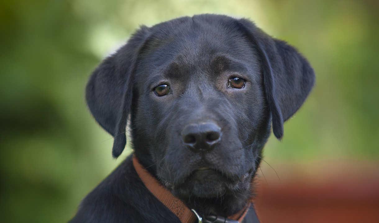 Gun Brand Names For Female Dogs