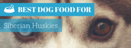 Best Dog Food For Huskies (Best 4 in 2017)