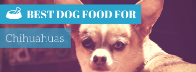 Best Dog Food For Chihuahuas (TOP 4 picks in 2017)