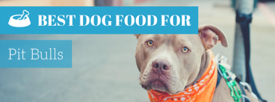 Best Dog Food For Pitbulls (TOP of 2017)?