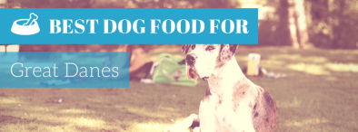 Best Dog Food For Great Danes (2017's Editor's TOP 4 Picks)