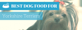 Best Dog Food For Yorkies? (TOP 4 in 2017)