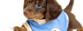 7 Interesting Facts About The Dachshund