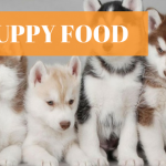 20 Best Puppy Foods (5 Wet and 15 Dry options)