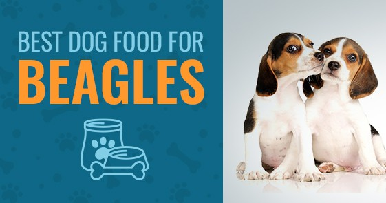 What Is The Best Dog Food For Beagles In 2018 Animalso