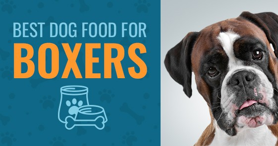 Best Dog Food For Boxers 2018 S Top 4 Animalso