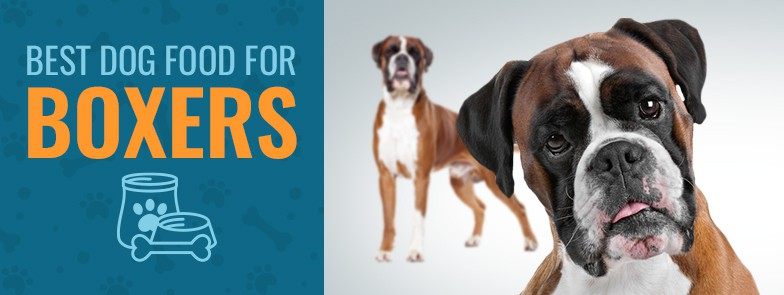 Best Dog Food For Boxers Top 4 In 2019 Animalso