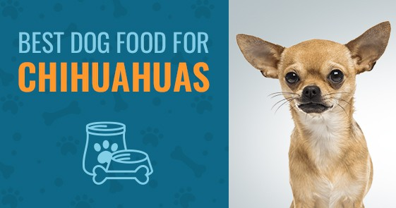 Best Dog Food For Chihuahuas Top 4 Picks In 2018 Animalso