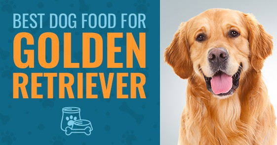 What Is The Best Dog Food For Golden Retrievers In 2019