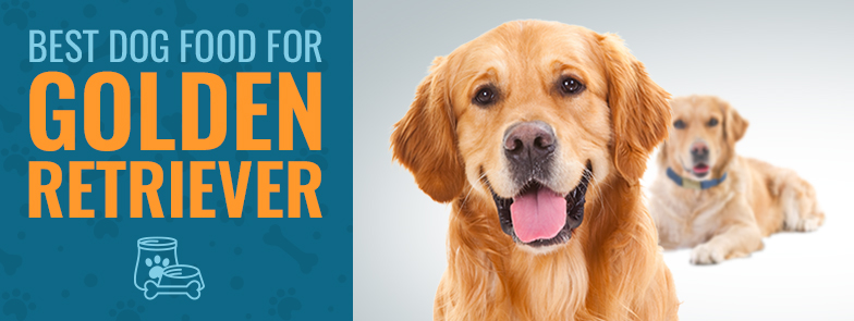 What Is The Best Dog Food For Golden Retrievers In 2018
