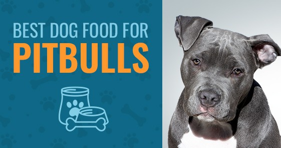 5 Best Dog Food For Pitbulls In 2020