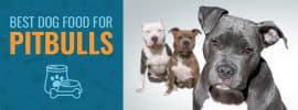 Best 4 Dog Food For Pitbulls | Reviews and Comparison