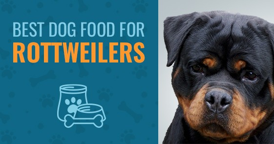 Best Dog Food For Rottweilers Best Of 2019 Animalso