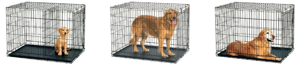 dog crates with dividers