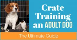 Crate Training an Adult Dog: The Ultimate Guide