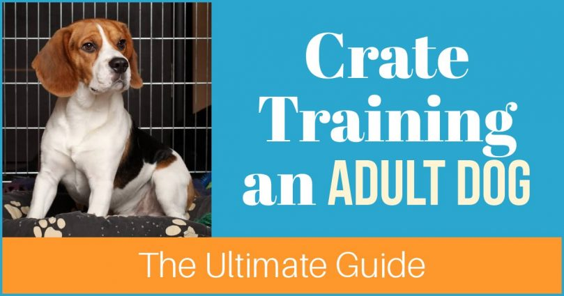 crate training an older dog