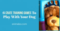 6 Crate Training Games to Play With Your Dog