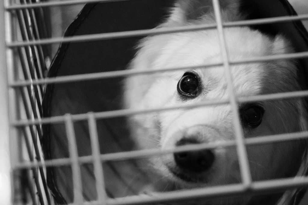 dog black and white cage