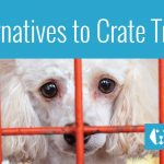 4 Alternatives To Crate Training a Dog