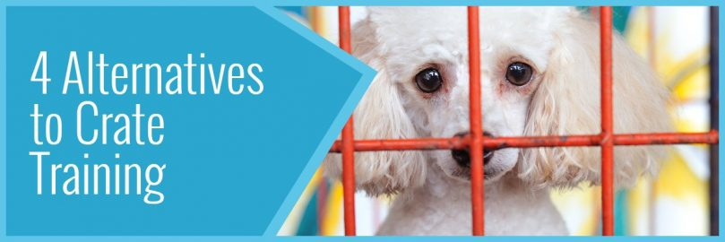 4 Alternatives To Crate Training a Dog - Animalso