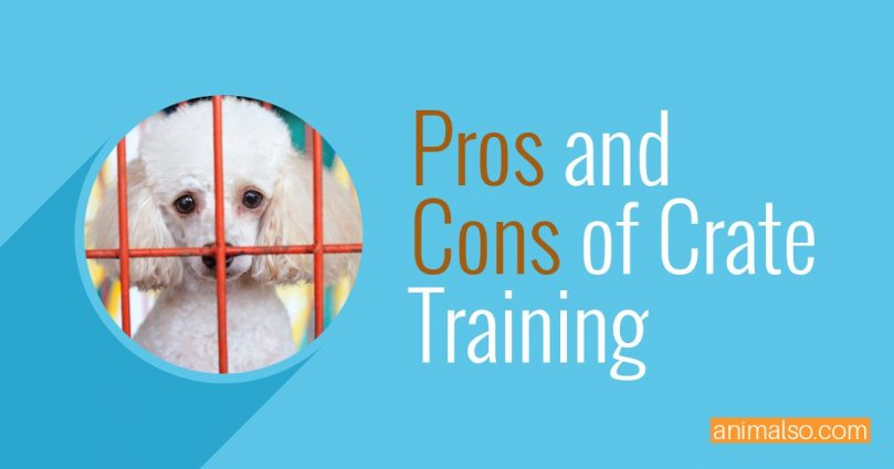Top 3 Pros and Cons of Crate Training Your Dog - Animalso