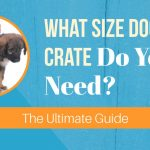 What Size Dog Crate Do You Need? [The Ultimate Guide]