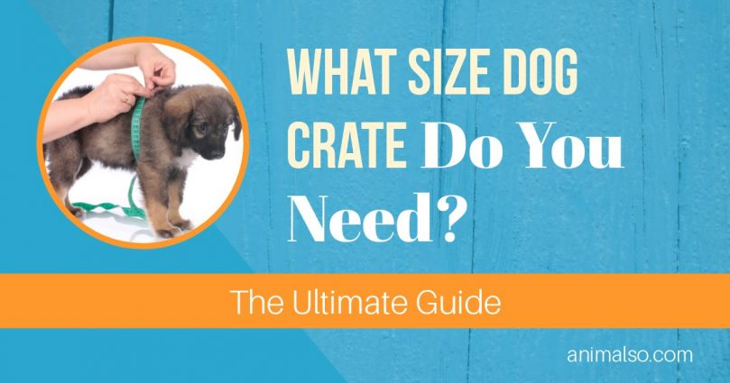 What Size Dog Crate Do You Need? [The Ultimate Guide] - Animalso