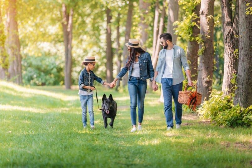 Family Walking with German Shepherd