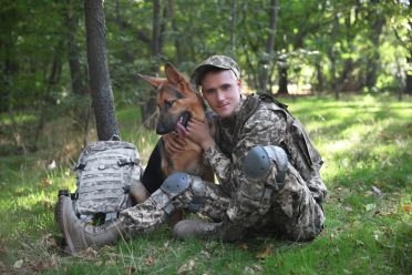 veteran german shepherd service dog