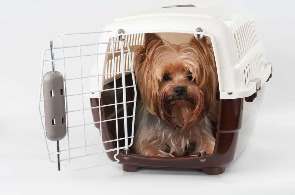 Top 15 Best Crates for Small Dogs and Puppies - Animalso