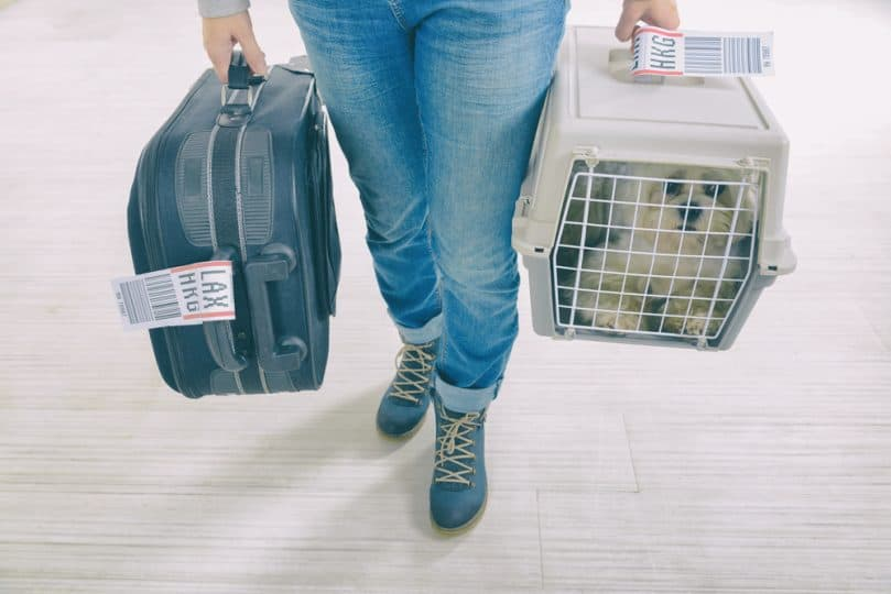 Carrying luggage and a dog crate