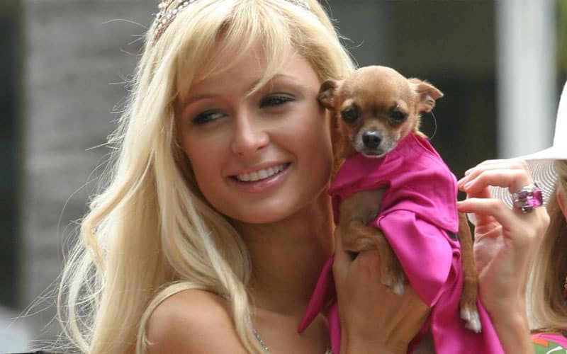 Paris Hilton and her pet Chihuahua, Tinkerbell
