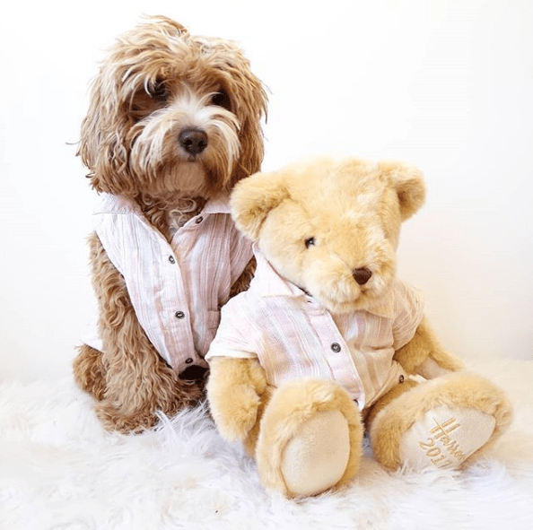 Your Childhood Dreams Come True The Teddy Bear Dog Animalso