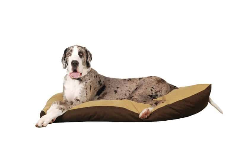 Great Dane laying on dog bed