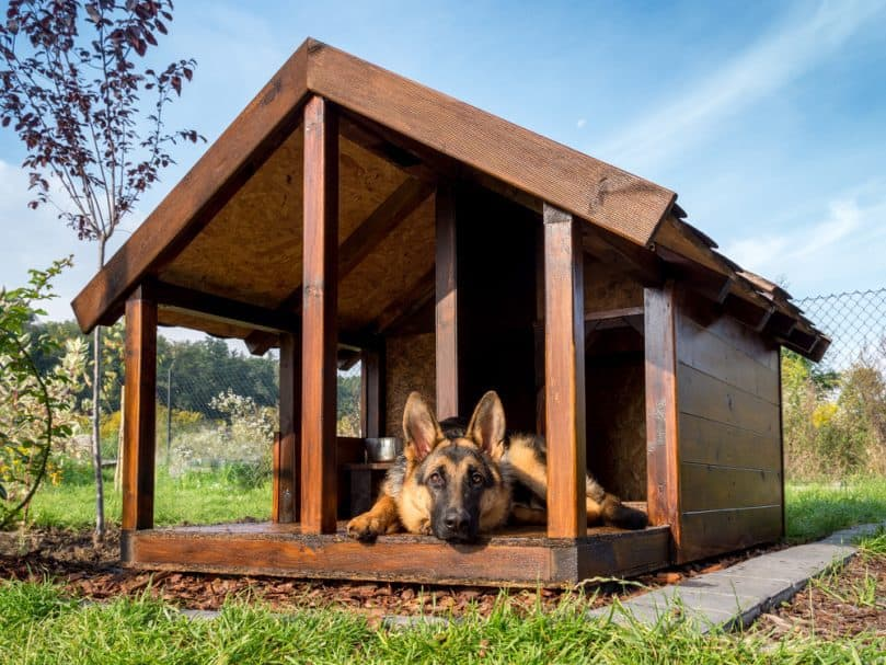 German shepherd resting in its heated kennel