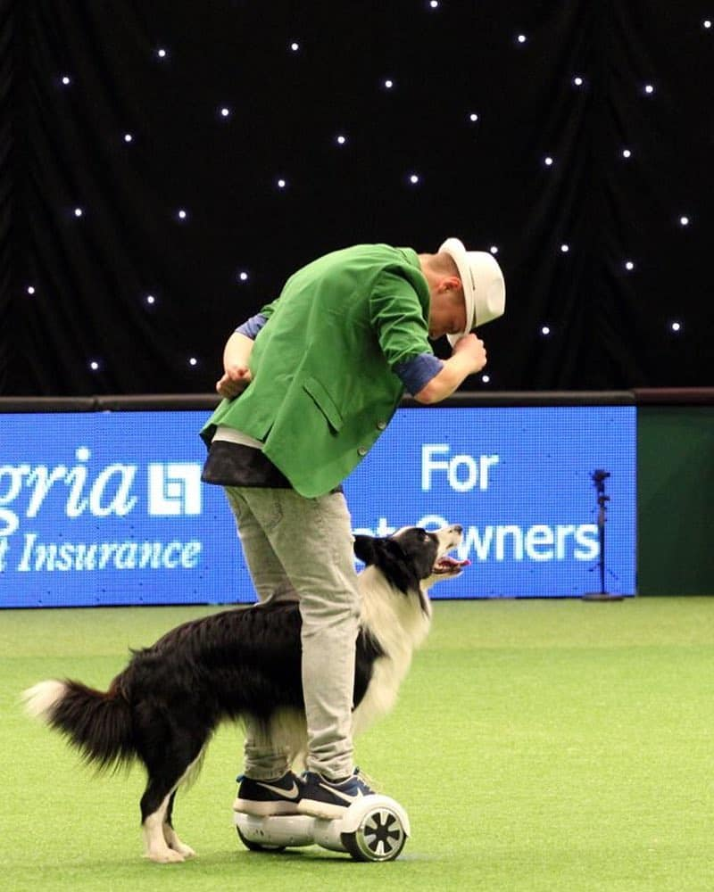 A Border Collie performing with its owner