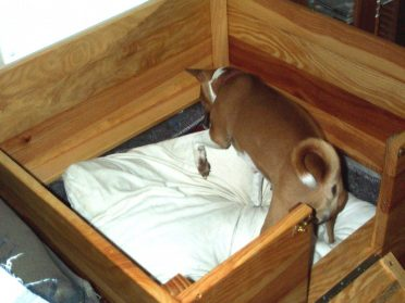 A dog nesting in a wood whelping box